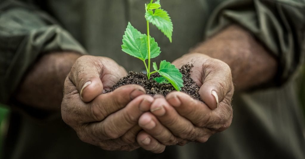 Plant being held in a persons hands